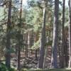 Declarado Parque Nacional la Sierra de Guadarrama