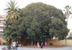 """Crowdfunding """"Árboles Singulares Protege tus raíces"""" de la Comarca de Molina de Aragón y Alto Tajo (Guadalajara)."""