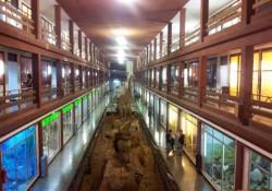 Museo de Ciencias Naturales El Carmen (Onda, Castellón).