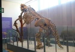 Museo de Ciencias Naturales de Valencia (1 de 2)