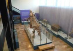 Museo de Ciencias Naturales de Valencia (2 de 2)