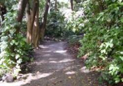 Jardín Botánico Histórico La Concepción (Málaga) (Parte 3 de 4). Jardines Modernos