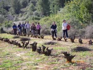Ruta de la Mistela (06-02-2010) 017_600x450