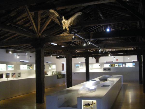 Vista general de la exposición de la Casa del Parque. En la parte superior, un buetre leonado.