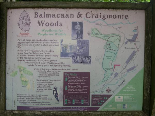 Balmacaan Woods en el Lago Ness (2)_600x450