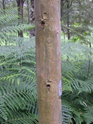 Señales descriptivas recogidas en Balmacaan Woods_375x500