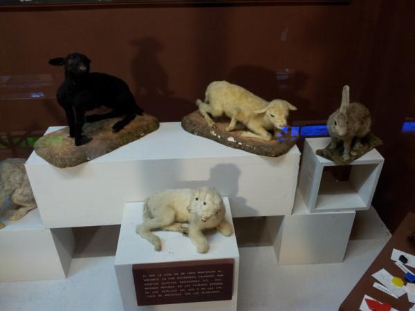 Museo de Ciencias Naturales El Carmen (Onda, Castellón). Colección de animales nacidos con malformaciones_600x450