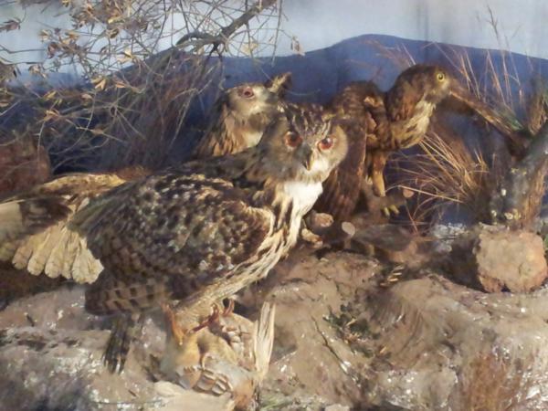Museo de Ciencias Naturales El Carmen (Onda, Castellón). Diorama aves rapaces_600x450