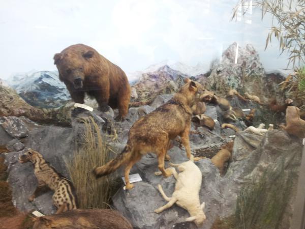 Museo de Ciencias Naturales El Carmen (Onda, Castellón). Diorama zona montañosa_600x450