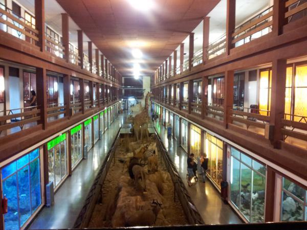 Museo de Ciencias Naturales El Carmen (Onda, Castellón). Vista general_600x450
