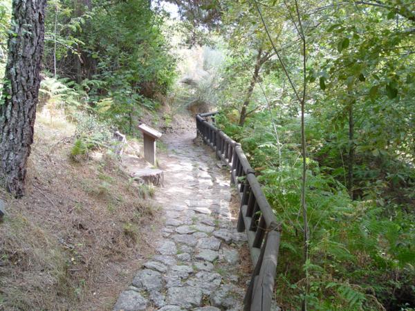 Senda en el Arboreto Luis Ceballos_600x450