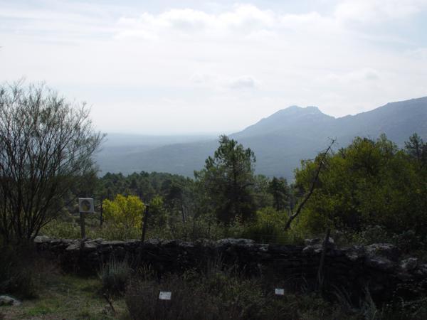 Vista panorámica de los alrededores del Arboreto Luis Ceballos._600x450