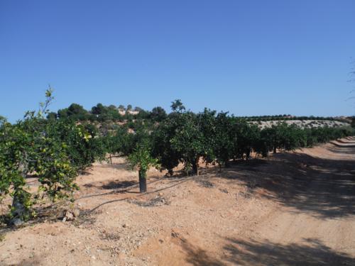 A partir de el área de descanso Lo monte, el paisaje cambia a zona de cultivos_500x375