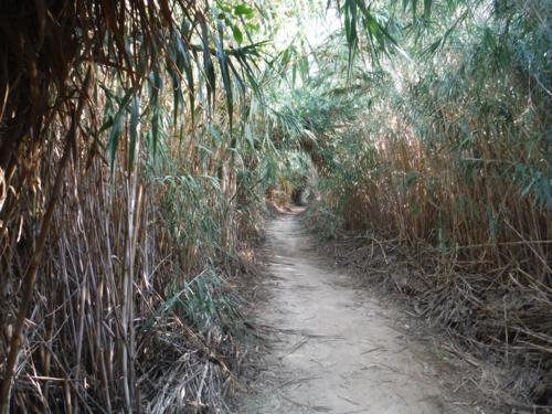 Tunel de juncos en el principio de la ruta (2)_500x375
