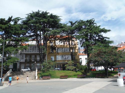 Camino de Santiago inglés. Impresionantes árboles en la plaza del Marqués de Amboage (Ferrol)
