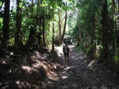 De Ferrol a Pontedeume. Se acaba el asfalto y empieza en bosque243x182