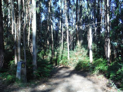 Zona boscosa tras la Iglesia de San Estevo de Cos. De Betanzos a Hospital de Bruma