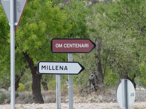 Olmo centenario de Millena
