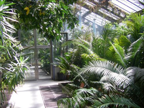 El real jard n bot nico de madridla cantimplora verde for Arboles del jardin botanico