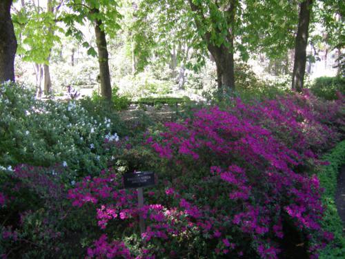El Real Jardín Botánico de Madrid