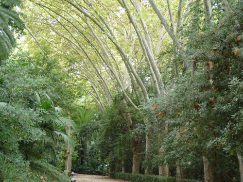 Jard n bot nico hist rico la concepci n m laga la for Jardin botanico de malaga