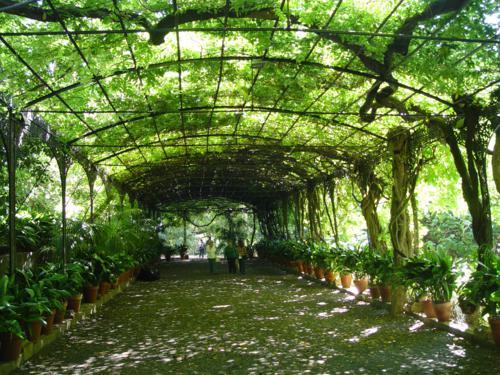 Jardín Botánico Histórico La Concepción (Málaga). Descripción de la parte histórica del jardín.