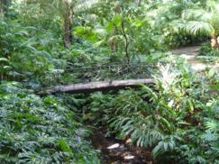 Sobre las películas rodadas en el jardín Botánico Histórico La Concepción