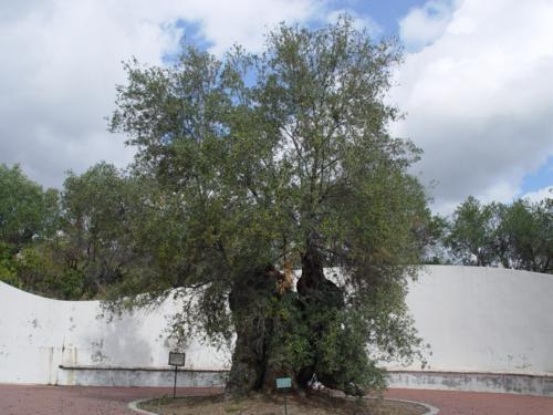 Jardín Botánico Histórico La Concepción (Málaga). Jardines Modernos
