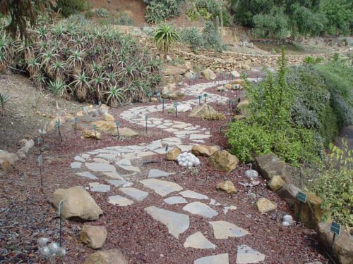 Una de las vistas del Jardín de Cactus y Suculentas_500x375