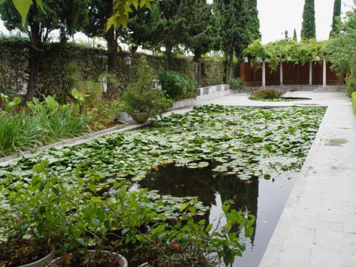 Zona de las plantas acuaticas_500x375