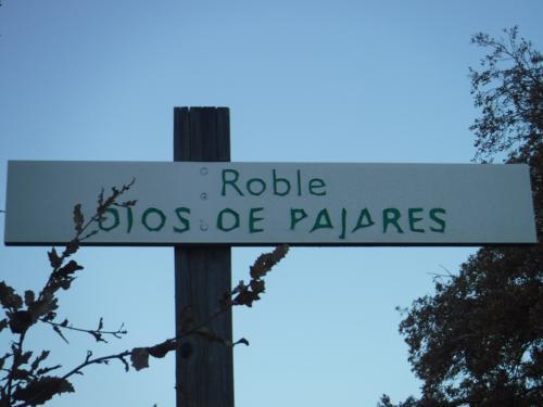 El dios de Pajares (Cuenca)