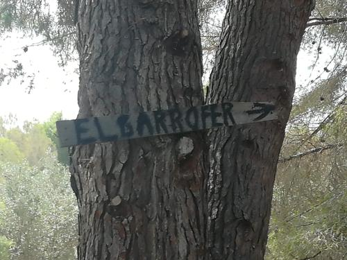 Algarrobo Monumental de Alfaz del Pí